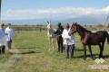 Respublika Atçılıq Turizm və Atüstü Milli Oyunlar Mərkəzindəki atlara tibbi xidmət göstərilib