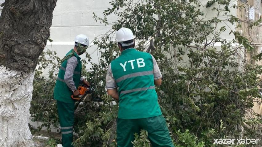 Güclü küləyin FƏSADLARI: 58 ağac aşdı
